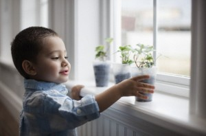 Boy (2-3) putting flower on sill