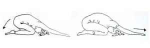 scarico-schiena